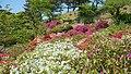 Rhododendron in Noshiro Park 20190519a.jpg
