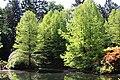 Rhododendronpark Bremen 20090513 091.JPG