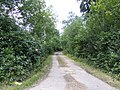 Road to Dolgarreg - geograph.org.uk - 520951.jpg