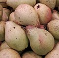 Rocha Pears 2017 A2.jpg