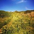 Rock-cornwall-england-tobefree-20150715-182958.jpg