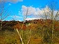 Rock Outcroping - panoramio.jpg