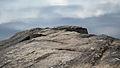 Rocky Shore - Algonquin Provincial Park, Ontario.jpg
