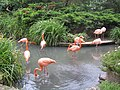 Rosa Flamingos im August 2011 - panoramio.jpg