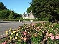 Roses at Hazlehead Roundabout - geograph.org.uk - 234576.jpg