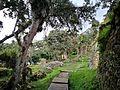 Ruïnes de Kuelap amb vegetació.jpg