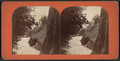 Rustic steps, Central Park, from Robert N. Dennis collection of stereoscopic views.png