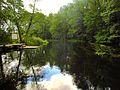 Rzeka Wda, widok z kładki.jpg