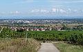 Sélestat depuis Kintzheim (1).jpg