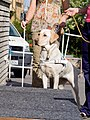 SVVP Klikatá, pes označující schod.jpg
