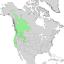 Salix lasiandra range map 1.png