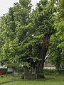Sankt Georgen im Attergau 1000jährige Linde 1.JPG