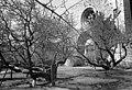 Sankt Nicolai ruin - KMB - 16001000021445.jpg
