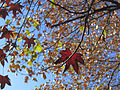 Santiago, autumn (9244486732).jpg