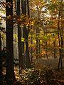 Schaumburger Wald 2015-10-31 - BA312895.jpg
