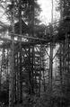 Scheinwerferanlage im Wald - CH-BAR - 3236852.tif