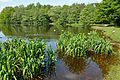 Schleswig-Holstein, Landschaftsschutzgebiet des Kreises Pinneberg, Sibirien NIK 5874.JPG
