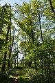 Schleswig-Holstein, Neuendorf, Naturdenkmal NIK 6243.JPG