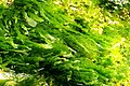 Seaweed (2751319758).jpg