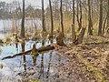 Seechen - Wernsdorf (Little Lake - Wernsdorf) - geo.hlipp.de - 34914.jpg