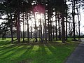 Sefton Park, Liverpool - geograph.org.uk - 349393.jpg