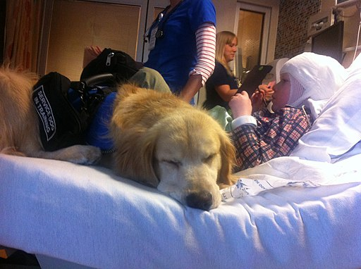 Service Dog in hospital bed