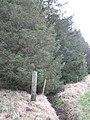 Shelterbelt, Deuglie - geograph.org.uk - 688465.jpg
