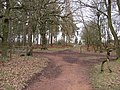 Sherwood Forest - Woodland Footpaths - geograph.org.uk - 722117.jpg
