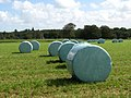 Silage bales in Barningham Park - geograph.org.uk - 544950.jpg