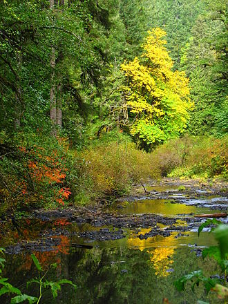 Silverton, Oregon - Silver Creek in autumn
