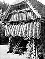 Skedenj jeseni 1930.jpg