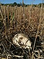 Skull of an animal.jpg