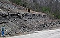 Slade Formation over Cowbell Member (Mississippian; Clack Mountain Road Outcrop, south of Morehead, Kentucky, USA) 1 (32415418688).jpg