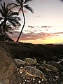 Sleeping turtles at Kohala - panoramio.jpg