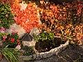 Small pond in evening autumn light (21992287213).jpg