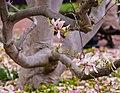 Smithsonian Gardens in April (16992375634).jpg