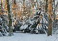 Snow in a small forest near Bad Vilbel 141228 1.jpg