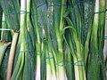 Spring.onions-01.jpg
