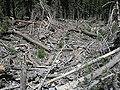 Spring Mountains Destruction.JPG