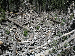 Spring Mountains National Recreation Area - Image: Spring Mountains Destruction