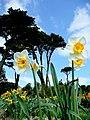 Spring at Trevarno - geograph.org.uk - 1230762.jpg