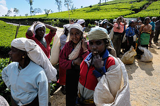 Tea production in Sri Lanka - Women waiting to get paid for their bags full of freshly harvested tea leaves