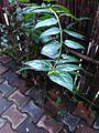Stair of leaves.jpg