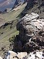 Starr 060924-0358 Coprosma montana.jpg
