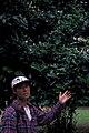 Starr 980511-4044 Posoqueria latifolia.jpg