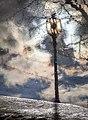 Street Lamp (24630905136).jpg