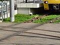 Stuttgart Kreuzung Meter-Normalspur1.jpg
