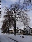 Suchdol - stromořadí lip srdčitých v Gagarinově ulici na Budovci (12).jpg