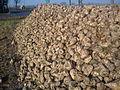 Sugar beets PL.jpg