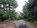 Summit of Cornell Mountain, Shandaken, NY.jpg